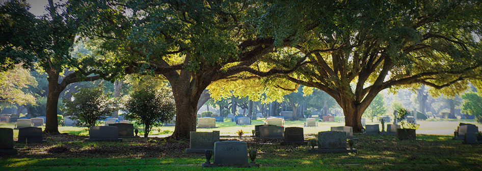 Shady Oaks Among the Graves of Roselawn Memorial Park